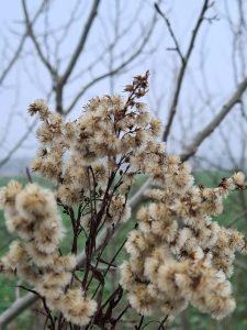 Winterpflanze